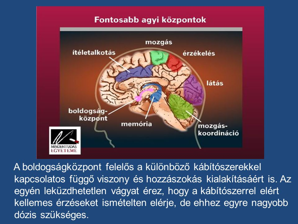 A boldogságközpont felelős a különböző kábítószerekkel kapcsolatos függő viszony és hozzászokás kialakításáért is.