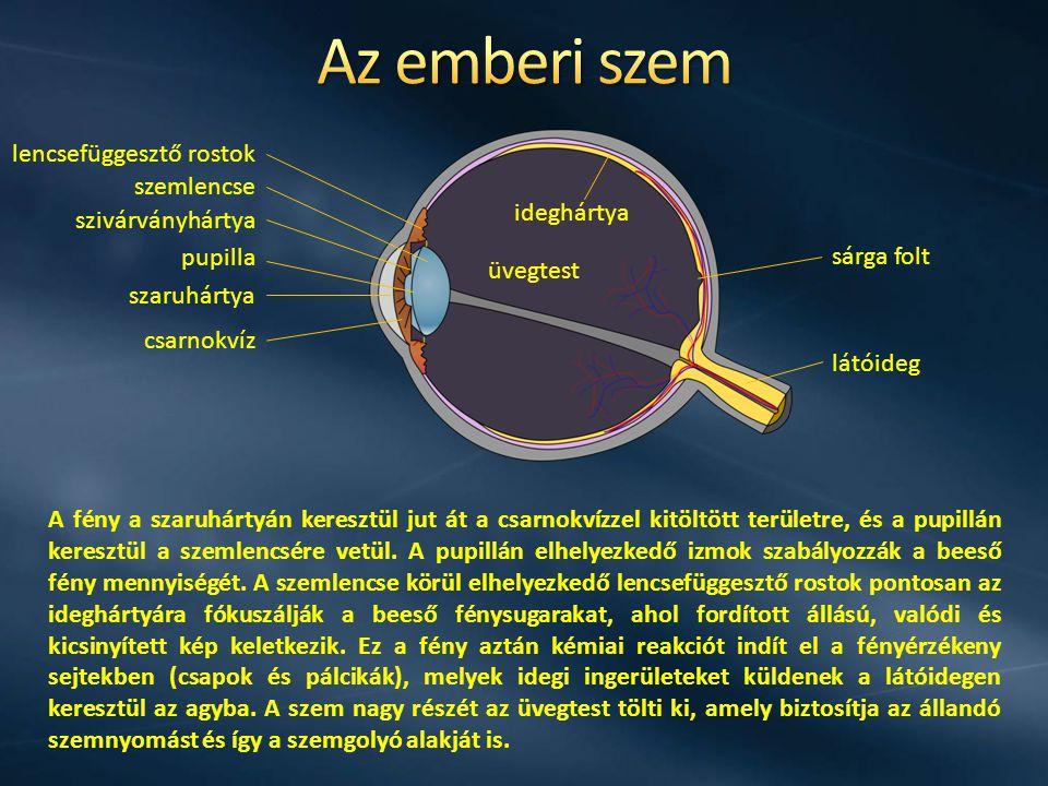 Az emberi szem lencsefüggesztő rostok szemlencse ideghártya