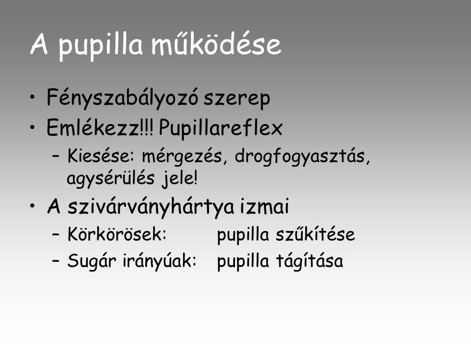 A pupilla működése Fényszabályozó szerep Emlékezz!!! Pupillareflex