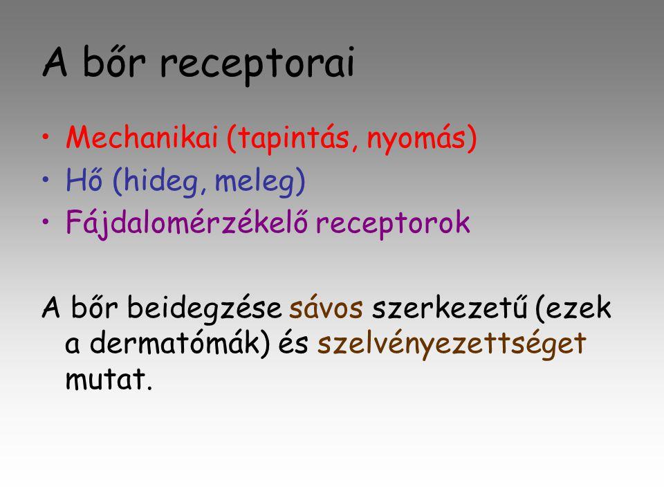A bőr receptorai Mechanikai (tapintás, nyomás) Hő (hideg, meleg)