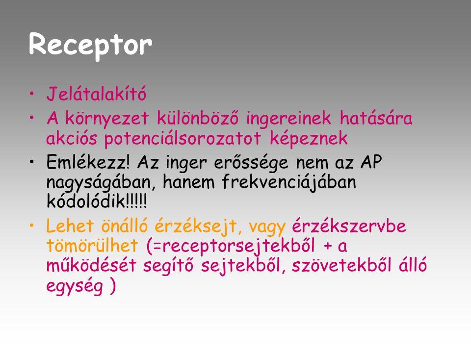 Receptor Jelátalakító
