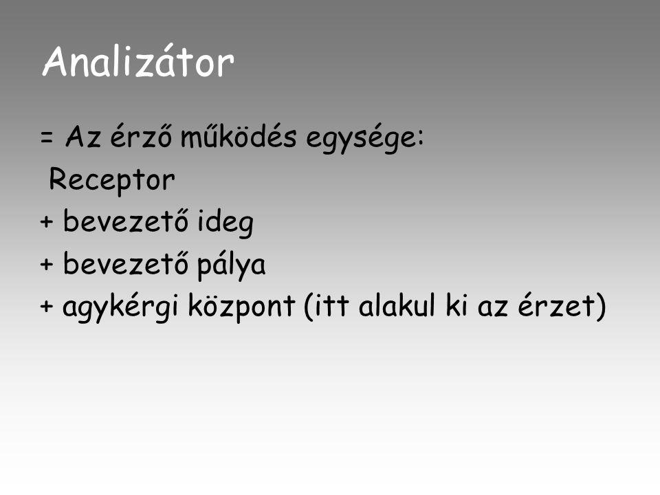 Analizátor = Az érző működés egysége: Receptor + bevezető ideg