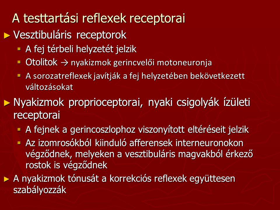 A testtartási reflexek receptorai