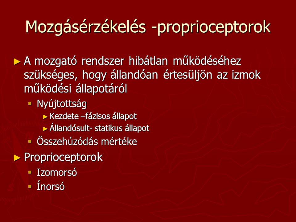 Mozgásérzékelés -proprioceptorok
