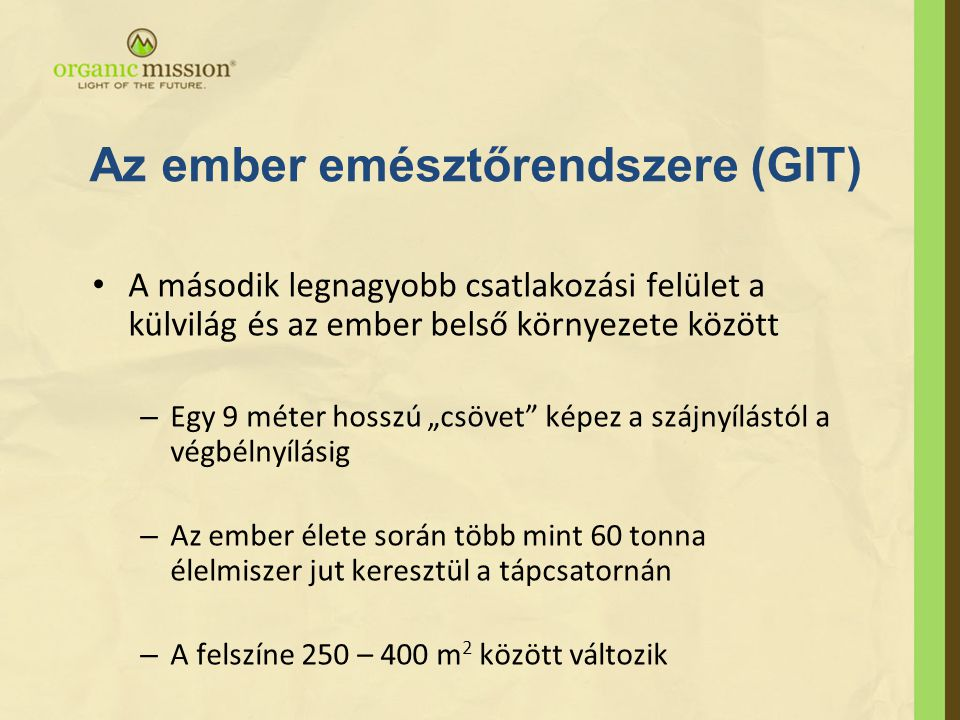 Az ember emésztőrendszere (GIT)