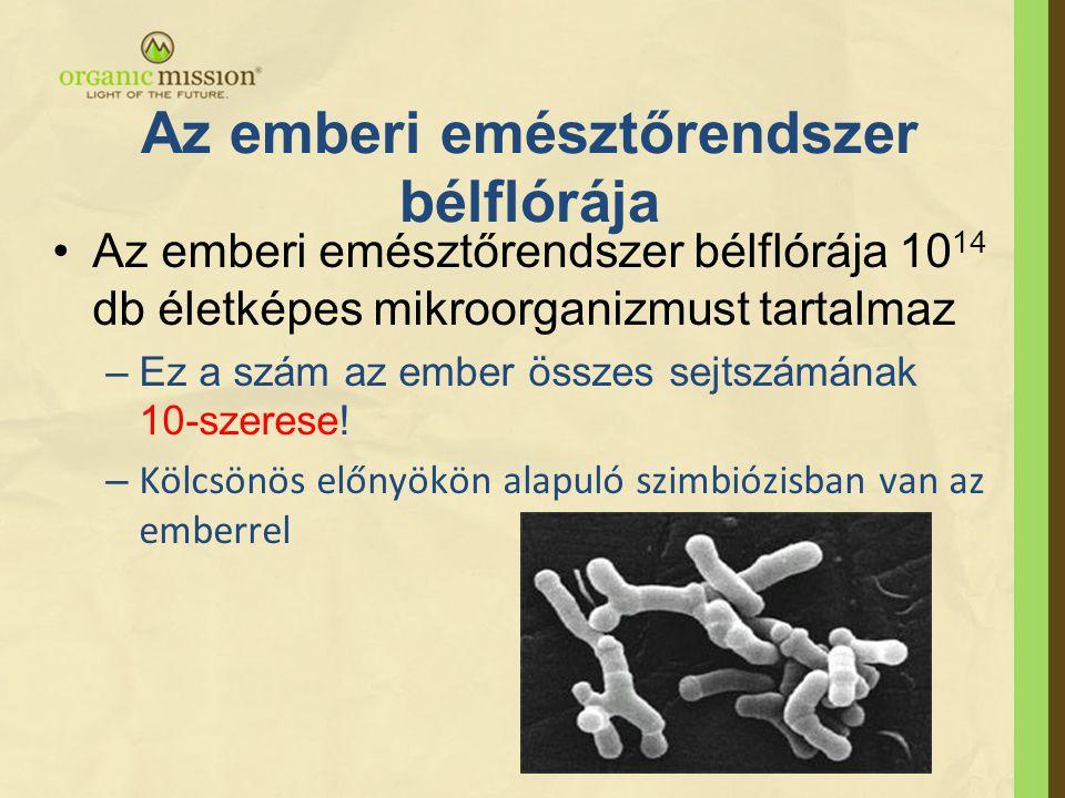Az emberi emésztőrendszer bélflórája