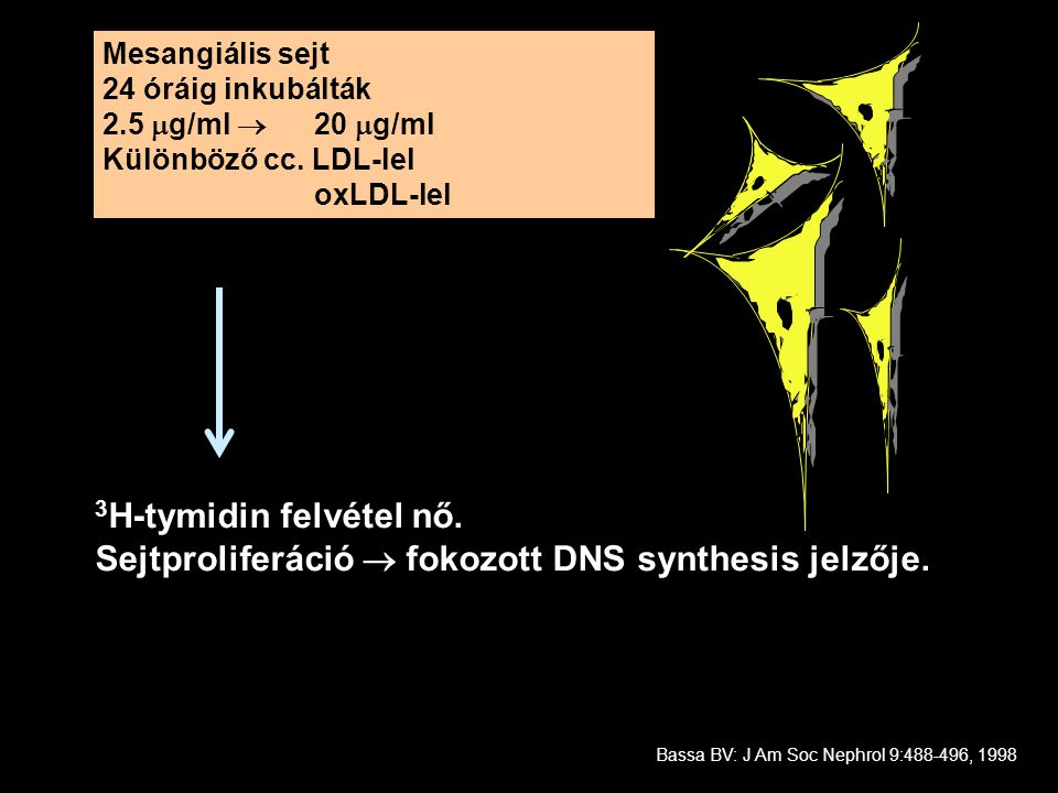 Sejtproliferáció  fokozott DNS synthesis jelzője.