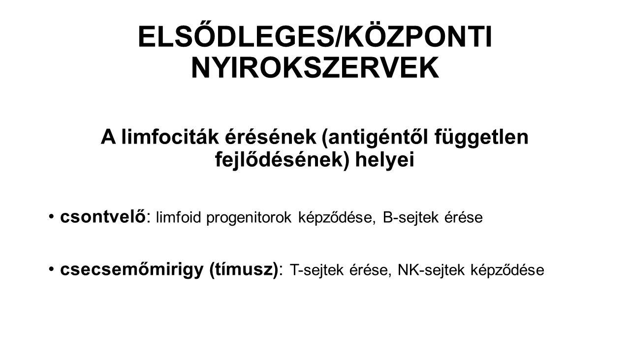 ELSŐDLEGES/KÖZPONTI NYIROKSZERVEK