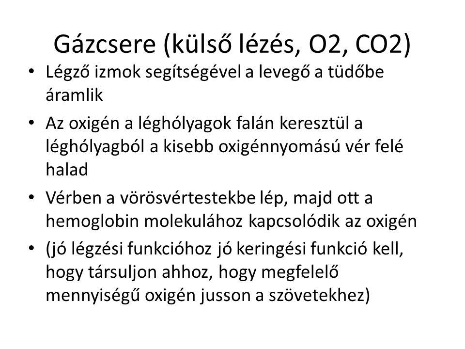 Gázcsere (külső lézés, O2, CO2)