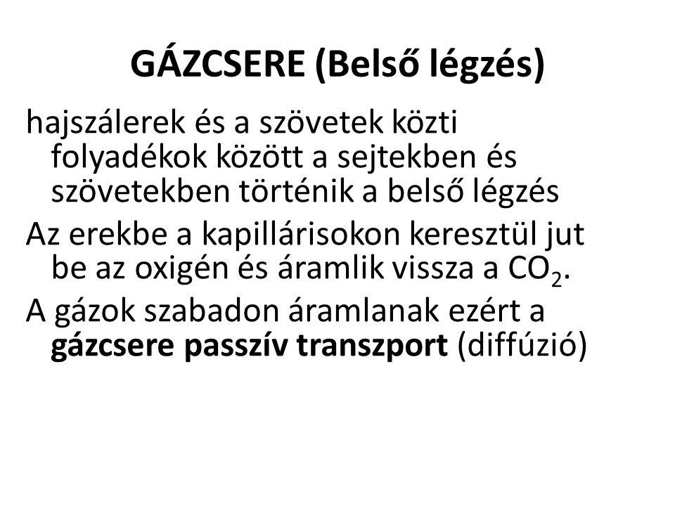 GÁZCSERE (Belső légzés)