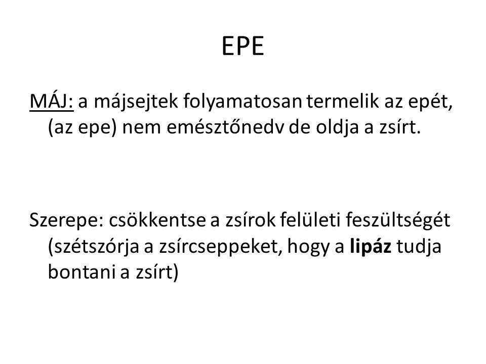 EPE MÁJ: a májsejtek folyamatosan termelik az epét, (az epe) nem emésztőnedv de oldja a zsírt.