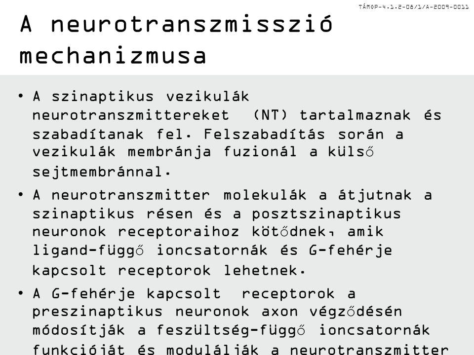 A neurotranszmisszió mechanizmusa