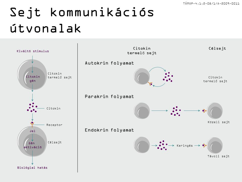 Sejt kommunikációs útvonalak