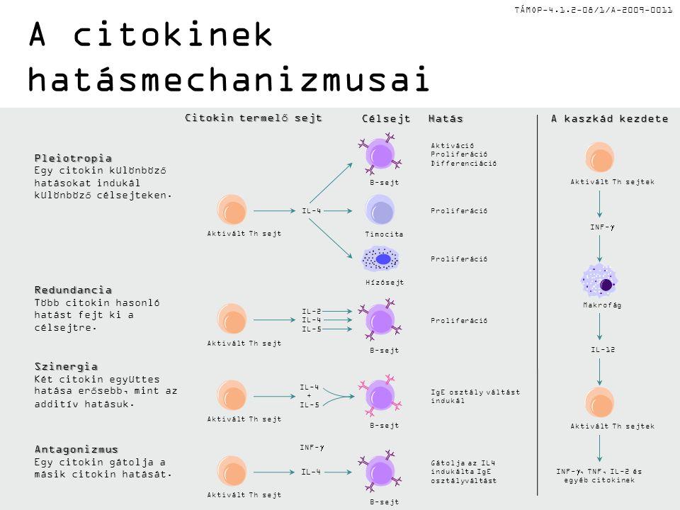 A citokinek hatásmechanizmusai