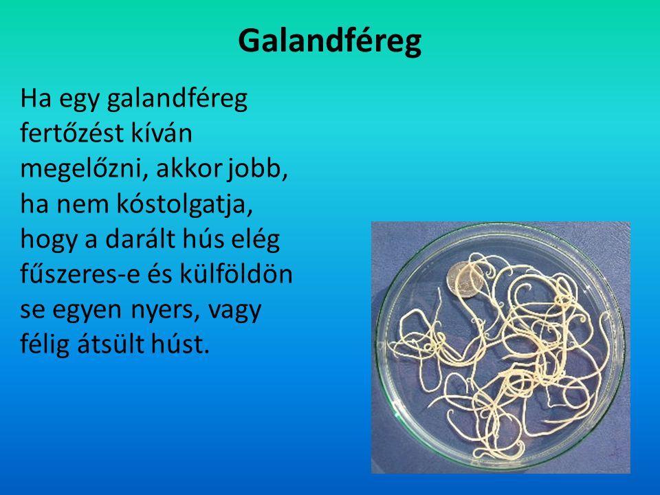 Galandféreg
