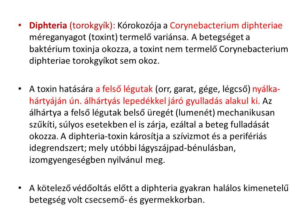 Diphteria (torokgyík): Kórokozója a Corynebacterium diphteriae méreganyagot (toxint) termelő variánsa. A betegséget a baktérium toxinja okozza, a toxint nem termelő Corynebacterium diphteriae torokgyíkot sem okoz.