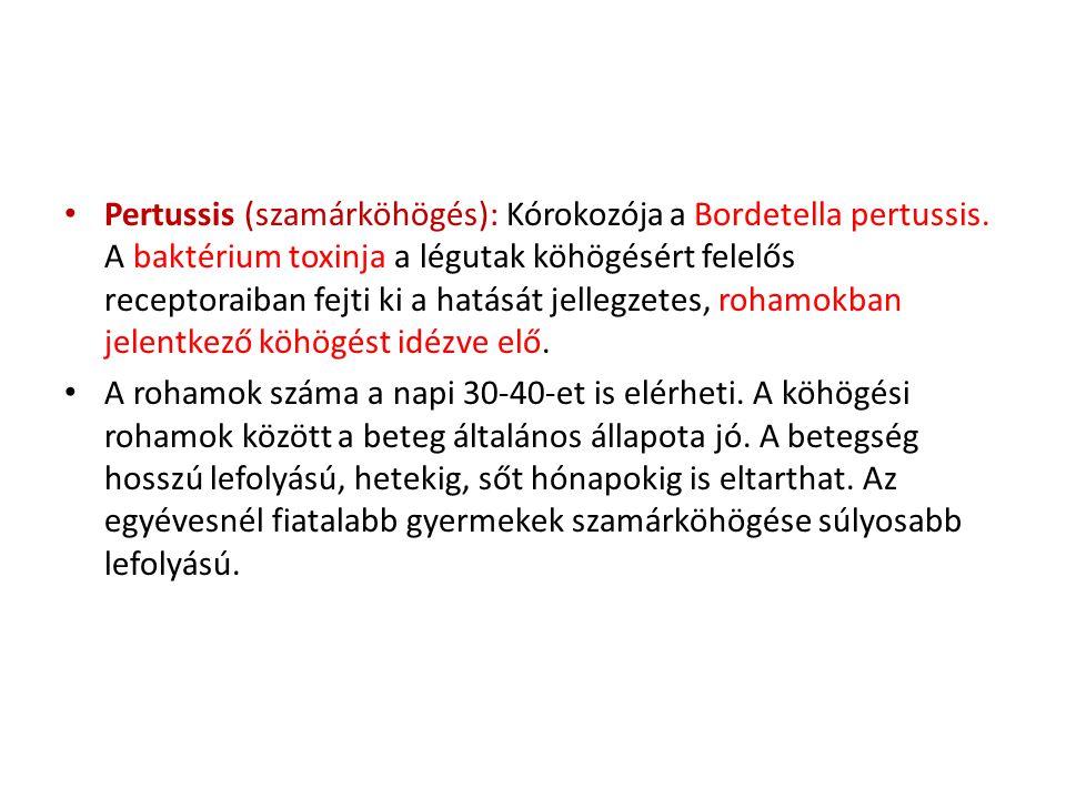 Pertussis (szamárköhögés): Kórokozója a Bordetella pertussis