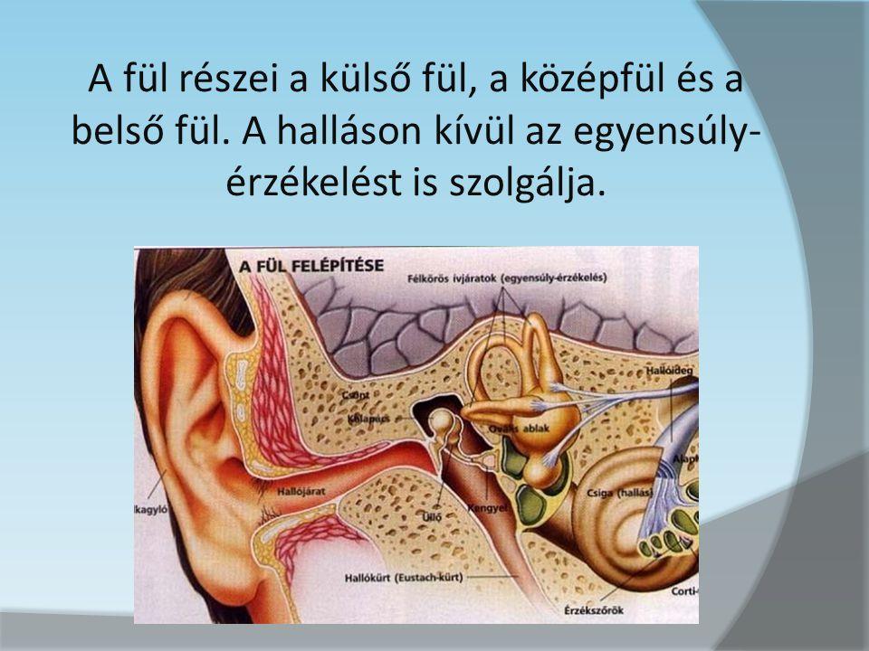 A fül részei a külső fül, a középfül és a belső fül
