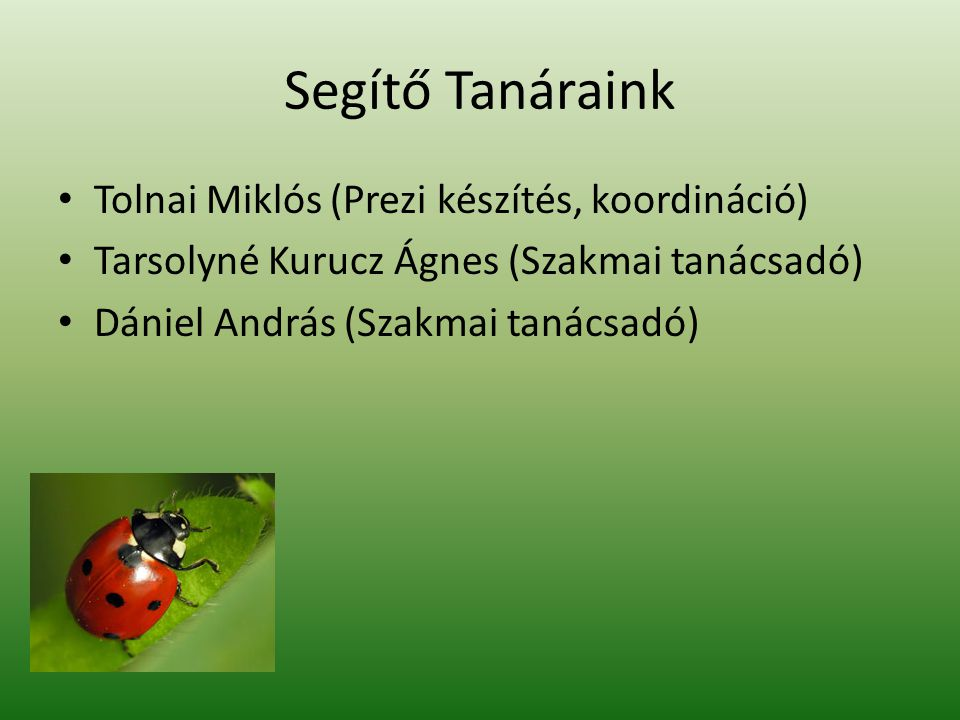 Segítő Tanáraink Tolnai Miklós (Prezi készítés, koordináció)