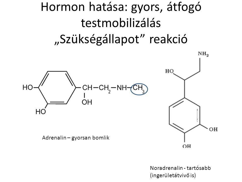 """Hormon hatása: gyors, átfogó testmobilizálás """"Szükségállapot reakció"""