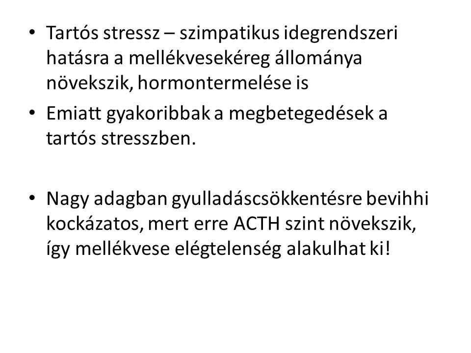 Tartós stressz – szimpatikus idegrendszeri hatásra a mellékvesekéreg állománya növekszik, hormontermelése is