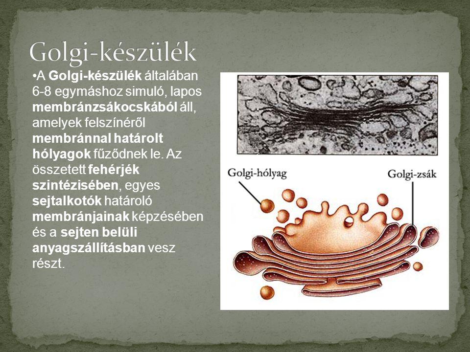 Golgi-készülék