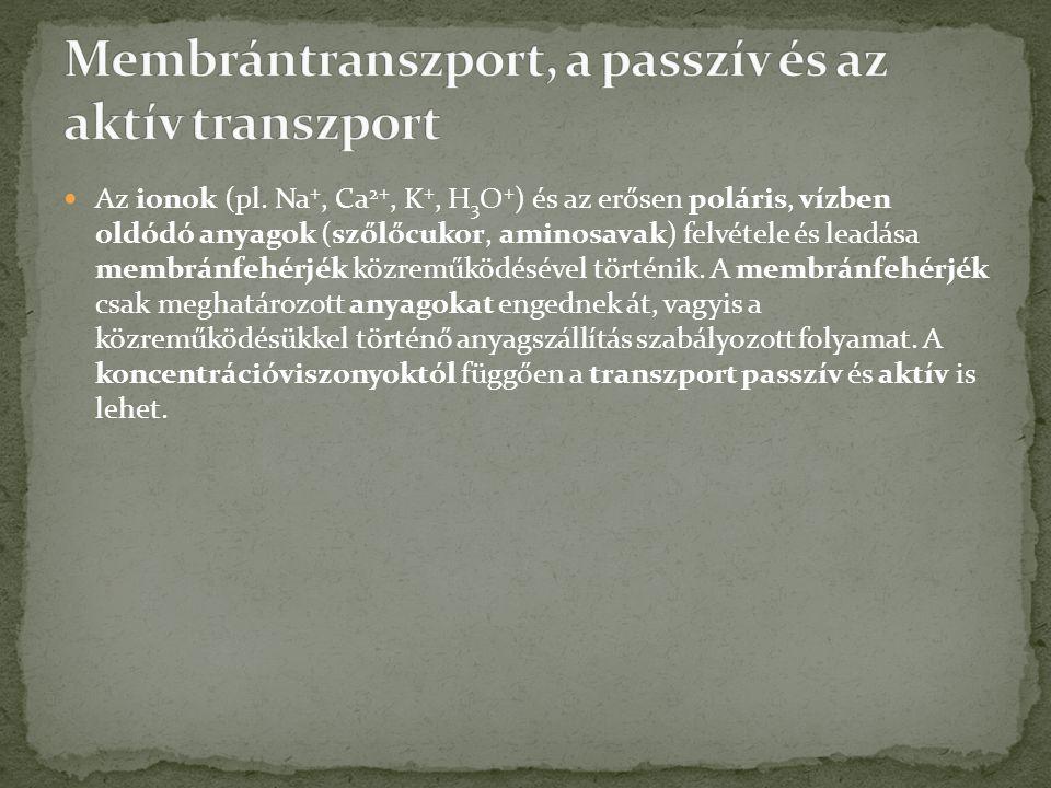 Membrántranszport, a passzív és az aktív transzport