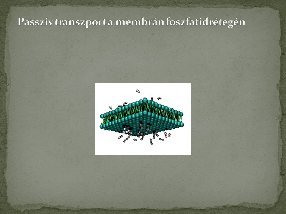 Passzív transzport a membrán foszfatidrétegén