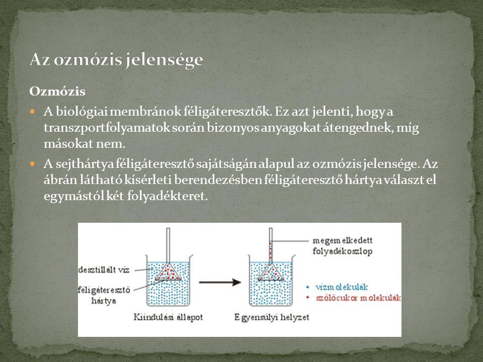 Az ozmózis jelensége Ozmózis