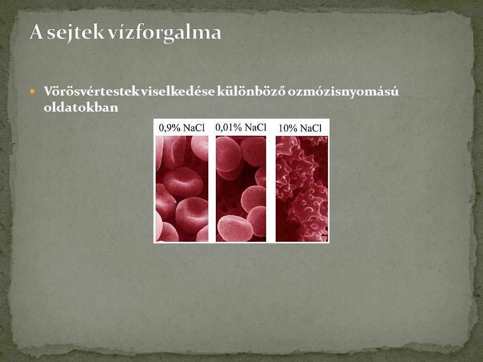 A sejtek vízforgalma Vörösvértestek viselkedése különböző ozmózisnyomású oldatokban