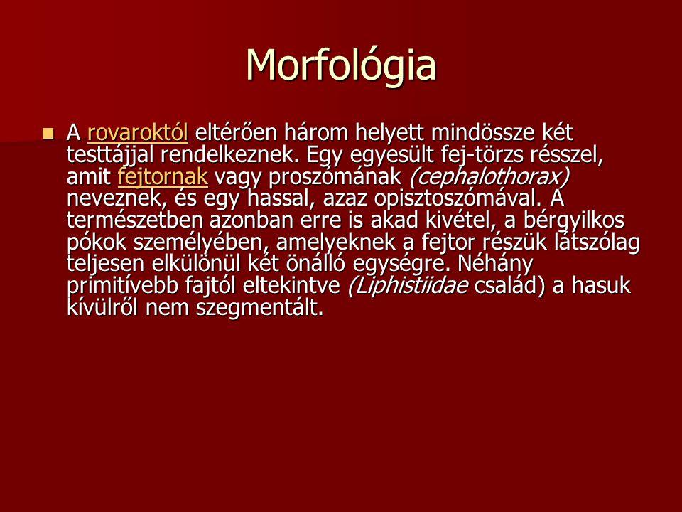 Morfológia