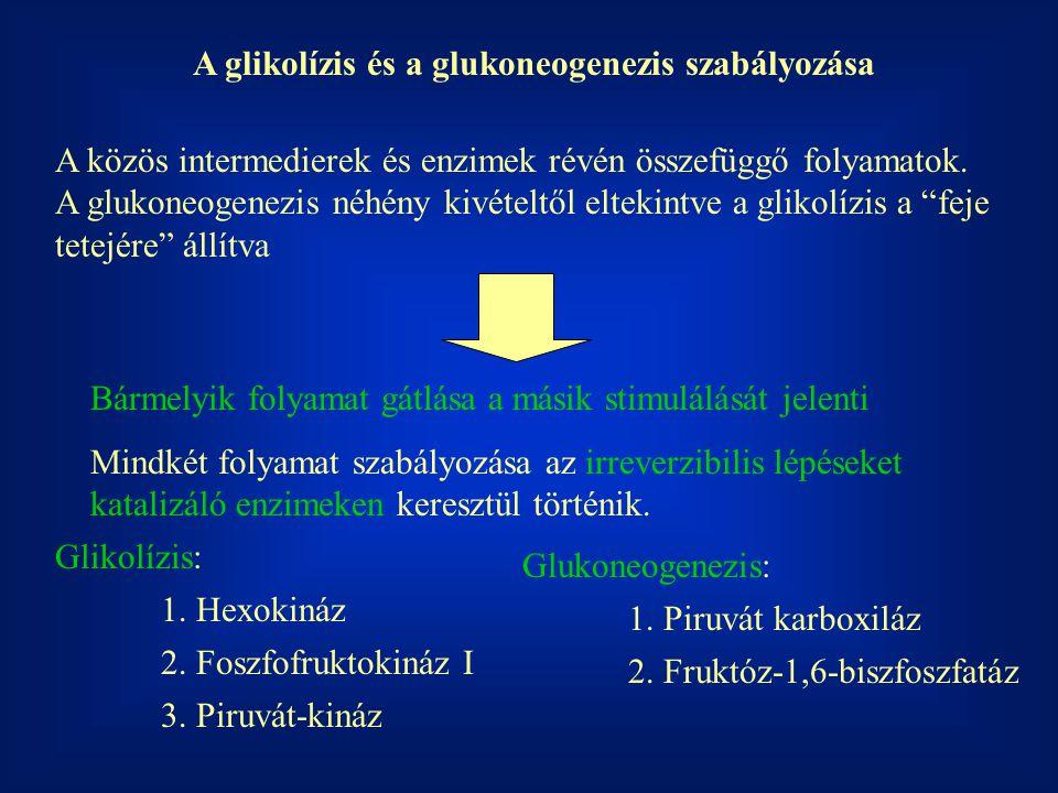 A glikolízis és a glukoneogenezis szabályozása