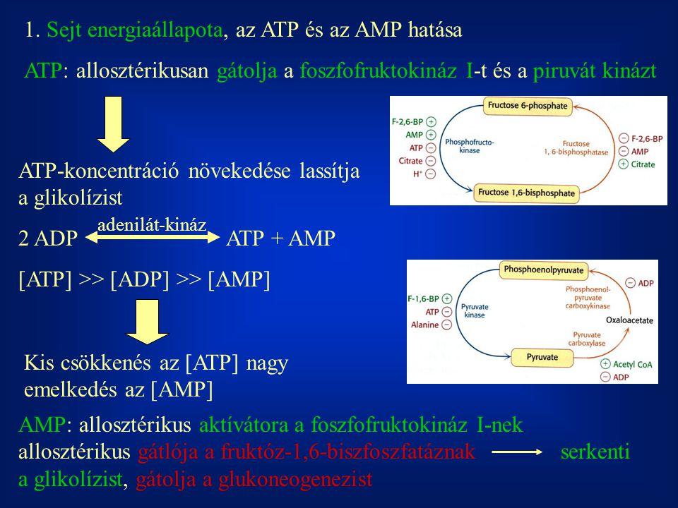1. Sejt energiaállapota, az ATP és az AMP hatása