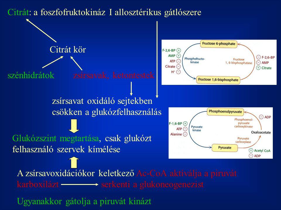 Citrát: a foszfofruktokináz I allosztérikus gátlószere