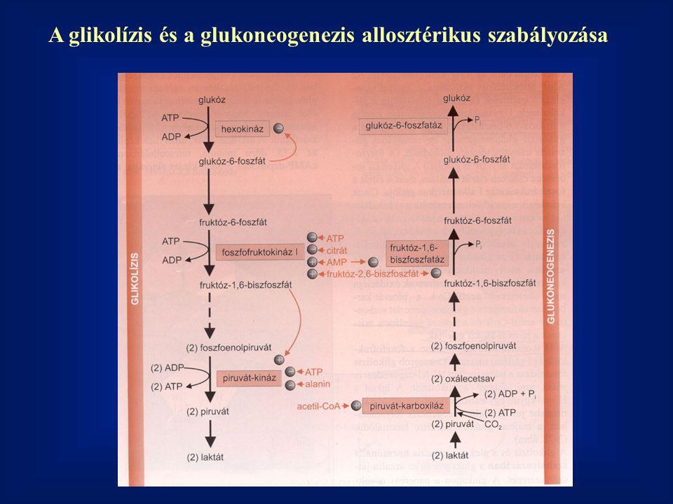 A glikolízis és a glukoneogenezis allosztérikus szabályozása