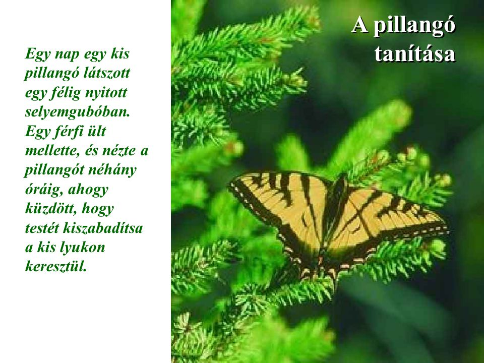 A pillangó tanítása