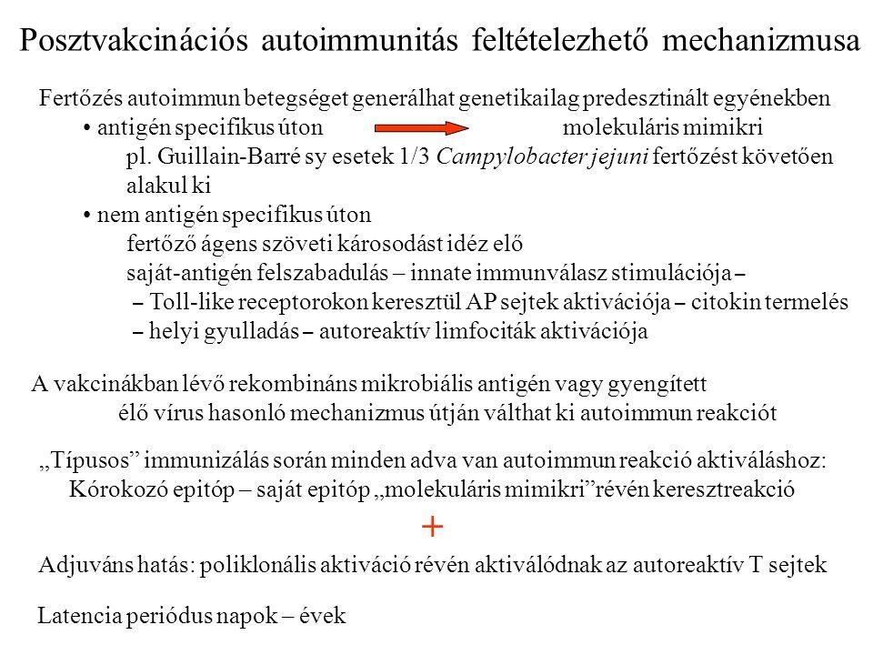 + Posztvakcinációs autoimmunitás feltételezhető mechanizmusa