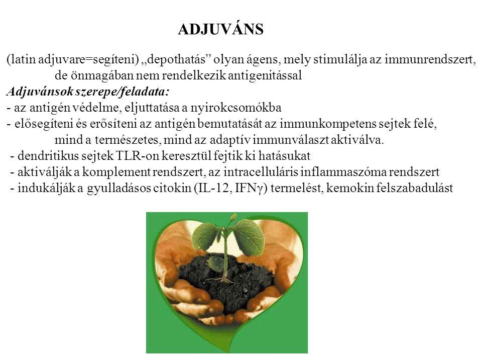 """ADJUVÁNS (latin adjuvare=segíteni) """"depothatás olyan ágens, mely stimulálja az immunrendszert, de önmagában nem rendelkezik antigenitással."""