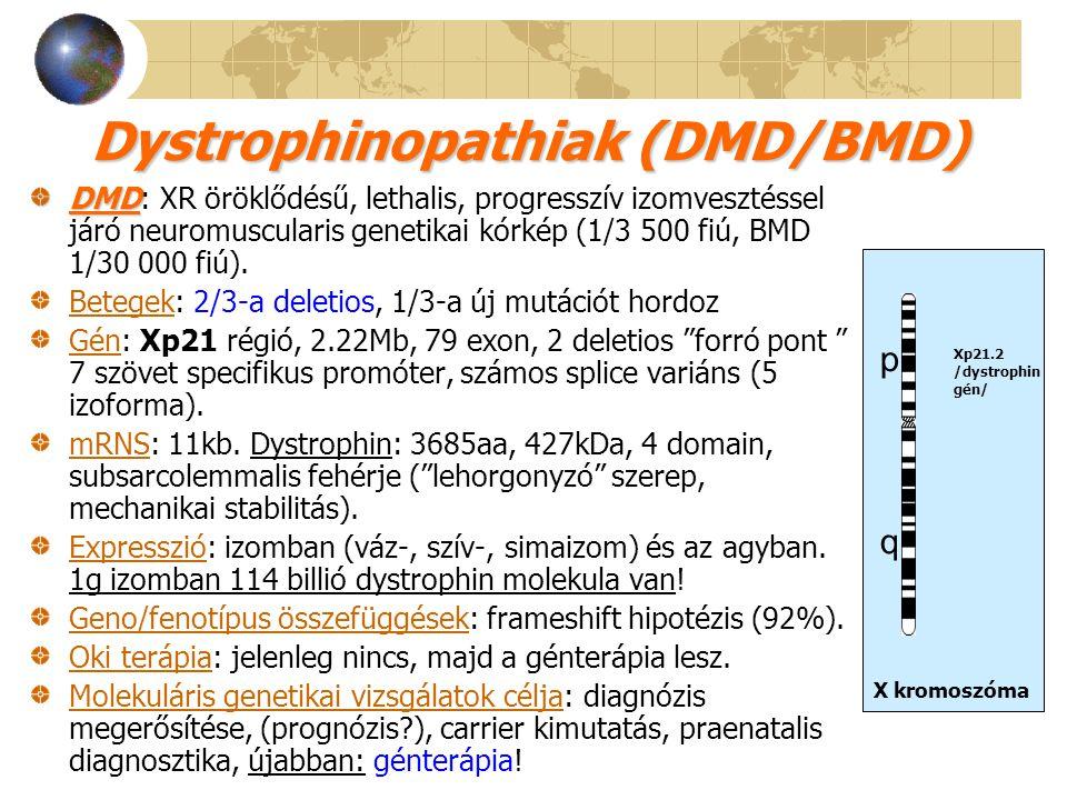 Dystrophinopathiak (DMD/BMD)