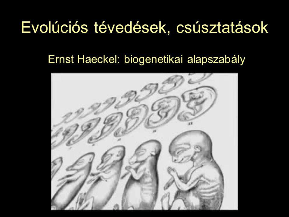 Evolúciós tévedések, csúsztatások