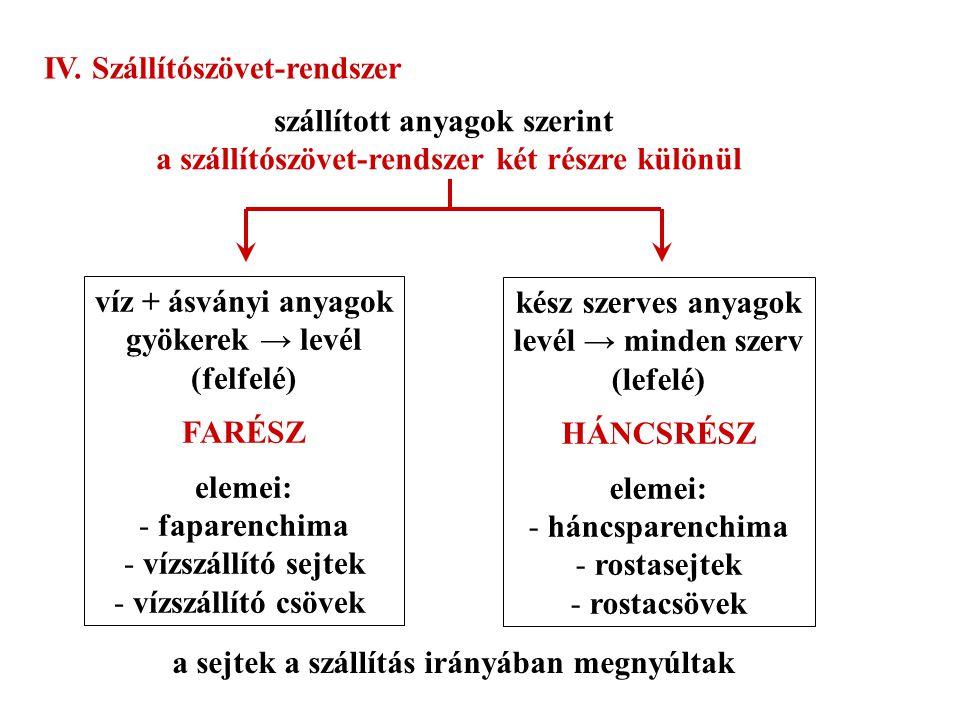 IV. Szállítószövet-rendszer