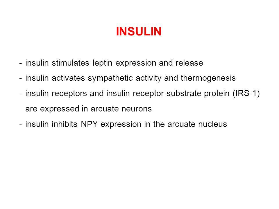INSULIN - insulin stimulates leptin expression and release