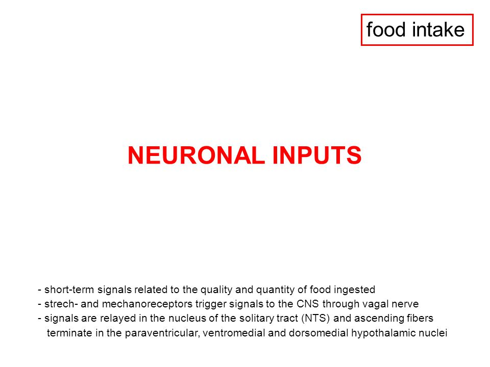 NEURONAL INPUTS food intake