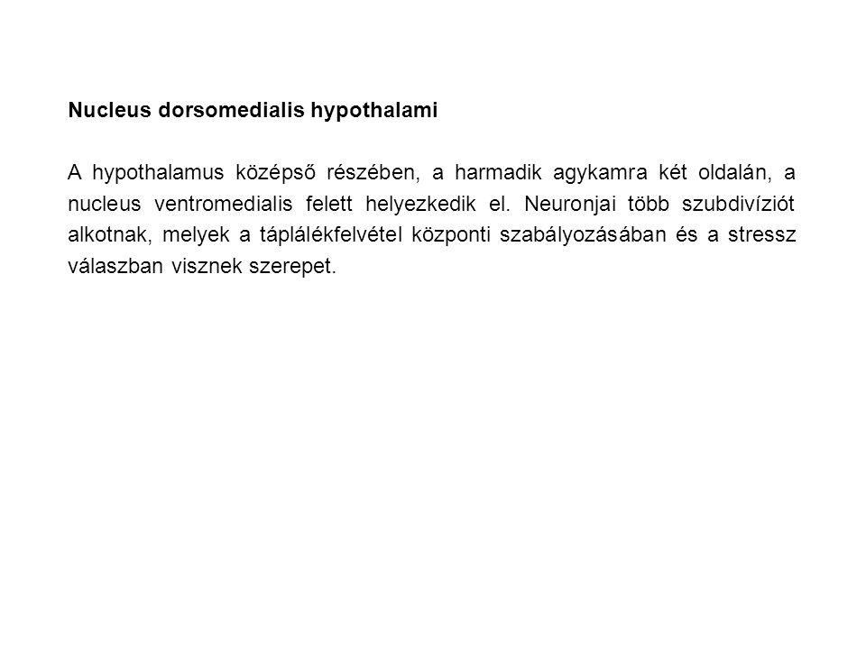 Nucleus dorsomedialis hypothalami