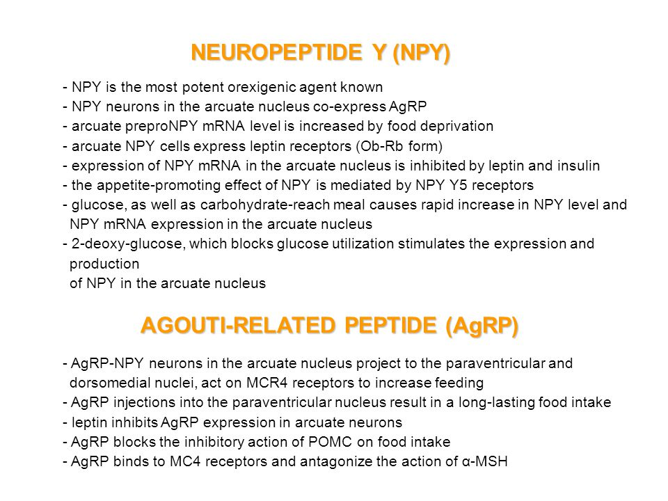 AGOUTI-RELATED PEPTIDE (AgRP)