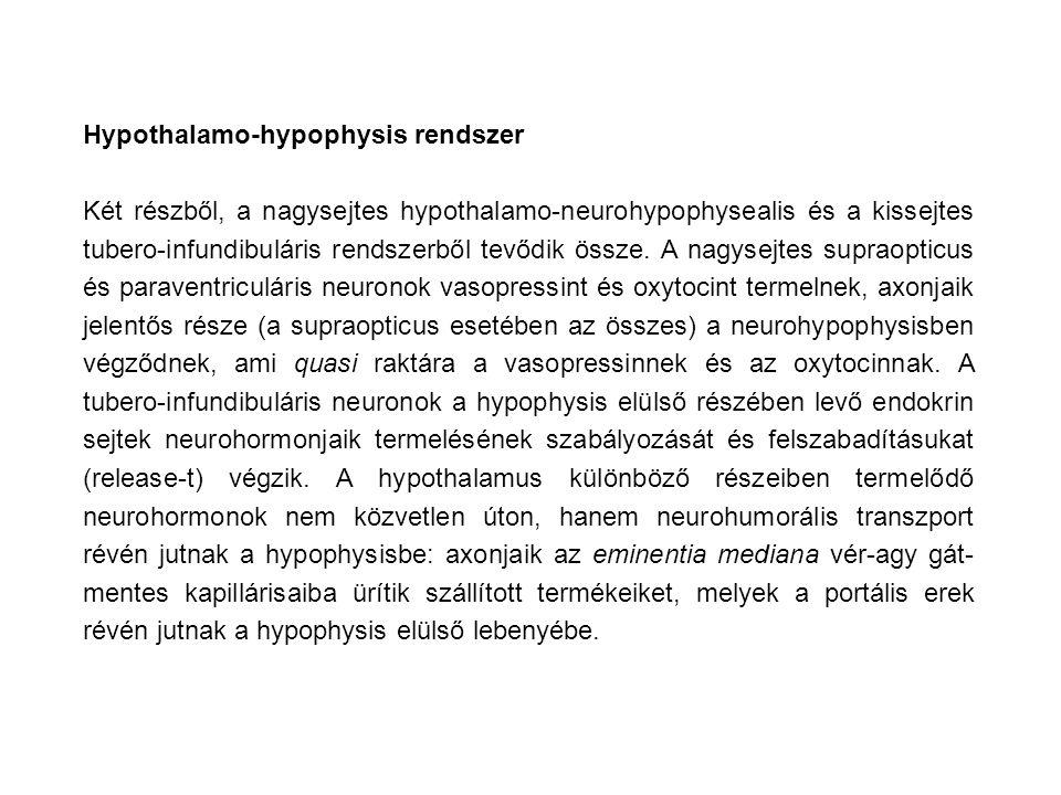 Hypothalamo-hypophysis rendszer