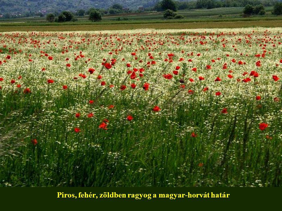 Piros, fehér, zöldben ragyog a magyar-horvát határ