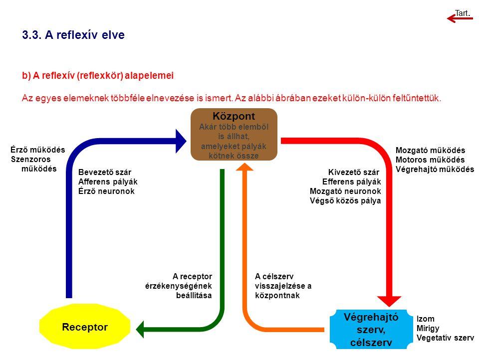 3.3. A reflexív elve Központ Végrehajtó szerv, célszerv Receptor