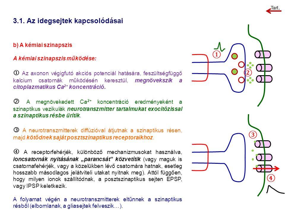 3.1. Az idegsejtek kapcsolódásai