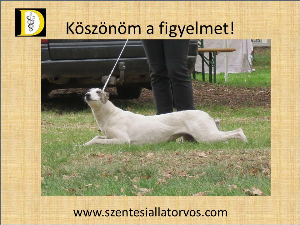 Köszönöm a figyelmet! www.szentesiallatorvos.com